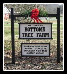 Bottoms Christmas Tree Farm in Cumming GA