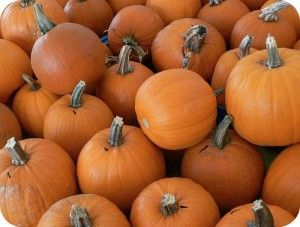 pumpkins | Fall Fun Activities in Forsyth County