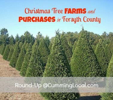 Christmas Tree Farms In Georgia.Christmas Tree Farms In Forsyth County