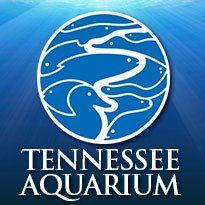 Summer Adventures: Tennessee Aquarium