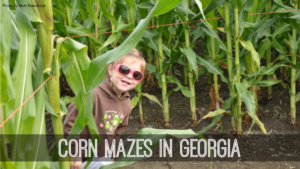 corn-mazes-in-georgia