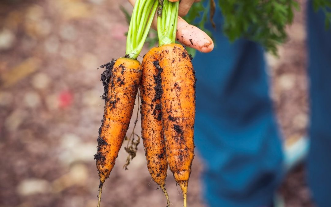 What's In Our Food? Top Food and Farming Myths