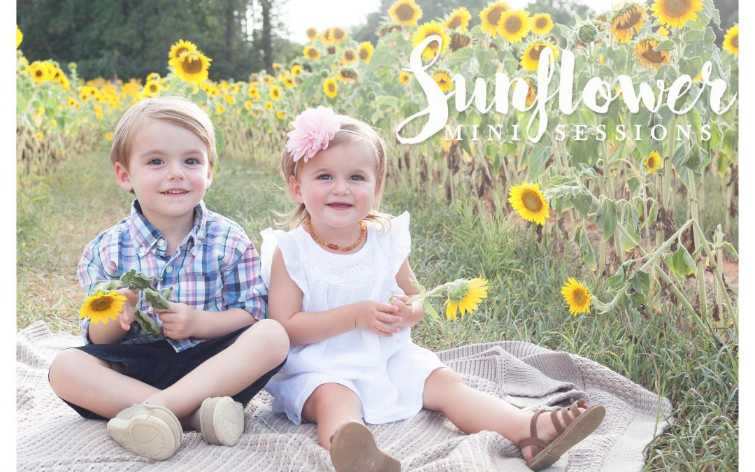 Sunflower mini sessions