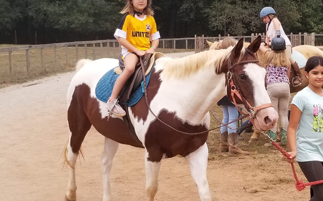 Horse Camps at WildeWood Farm This Summer 2020
